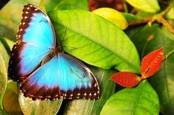 motyl a motýlek